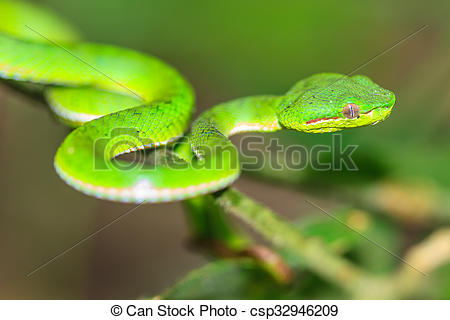 Green Pit Viper clipart #7, Download drawings