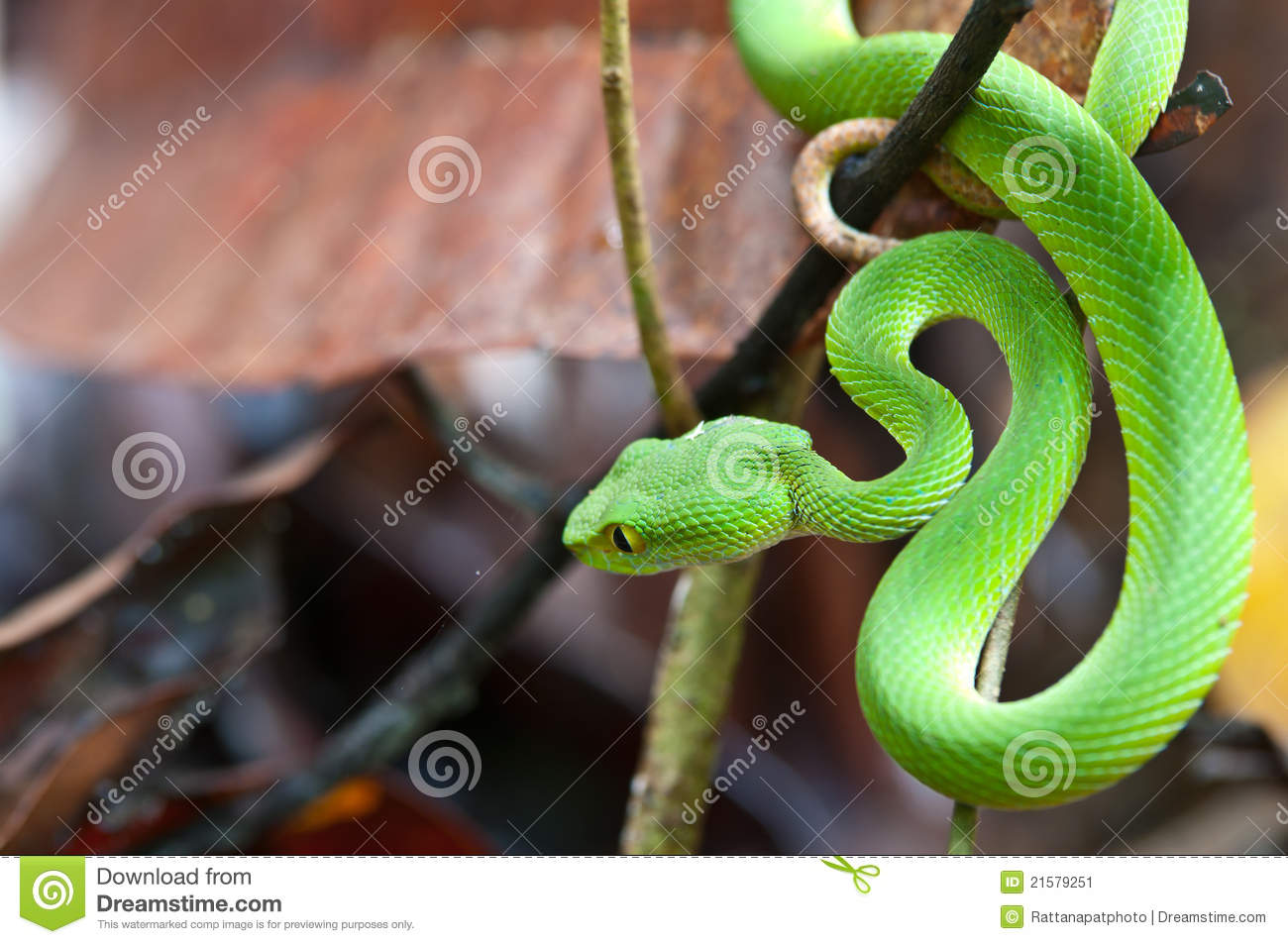 Green Pit Viper clipart #11, Download drawings