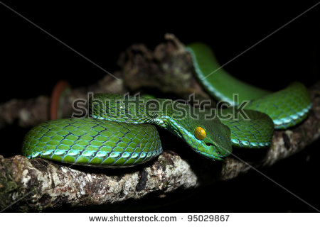 Green Pit Viper clipart #4, Download drawings