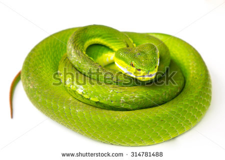 Green Pit Viper clipart #16, Download drawings