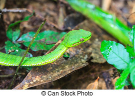 Green Pit Viper clipart #17, Download drawings