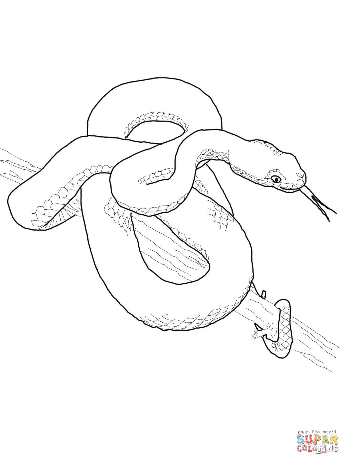 Tree Snake coloring #7, Download drawings