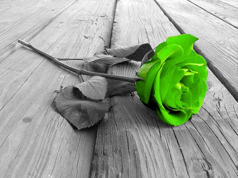 Green Rose coloring #17, Download drawings