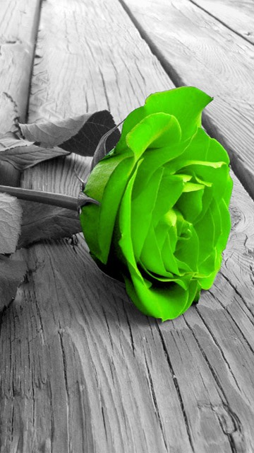 Green Rose coloring #18, Download drawings