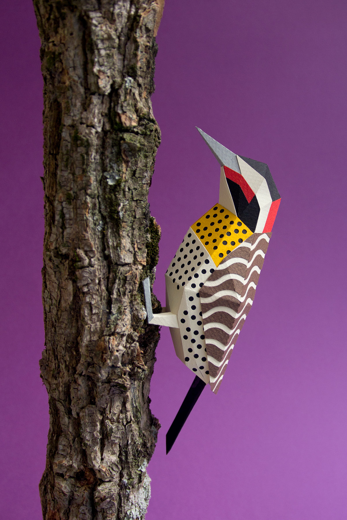 Green-barred Woodpecker svg #3, Download drawings