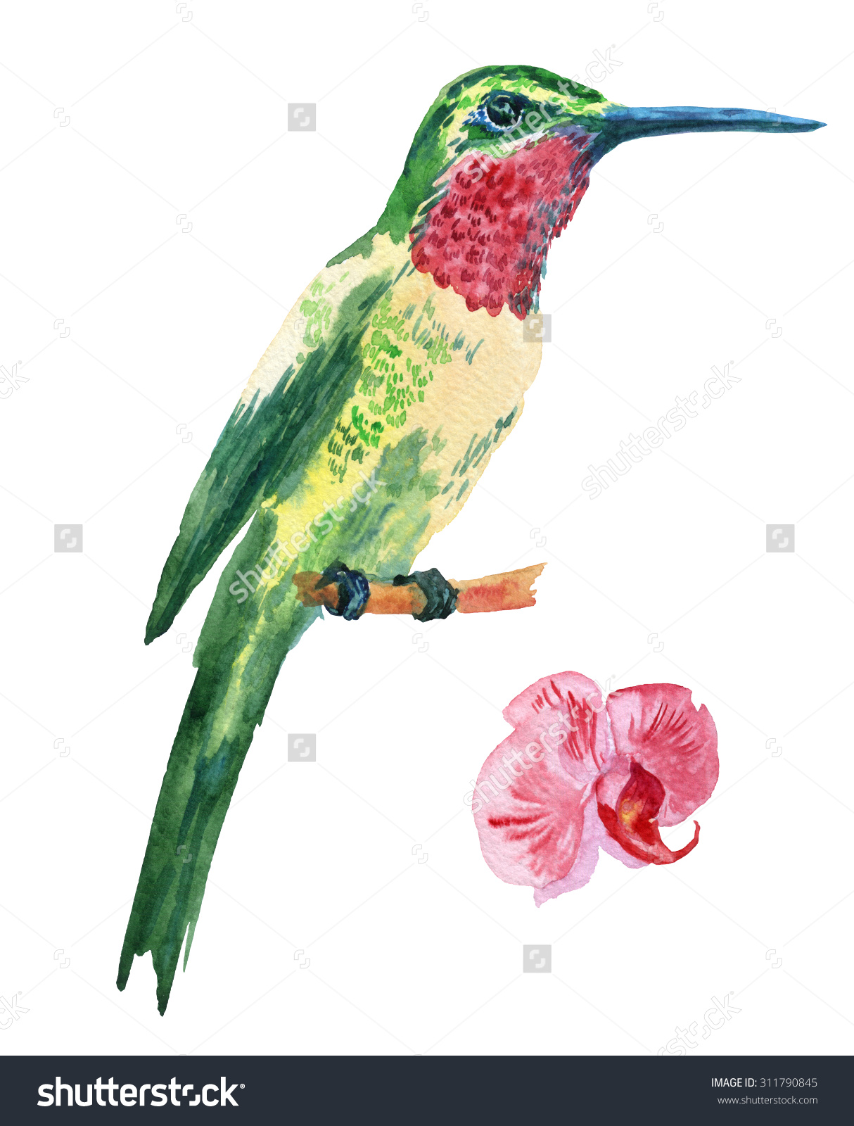 Green-throated Bird Of Paradise clipart #8, Download drawings