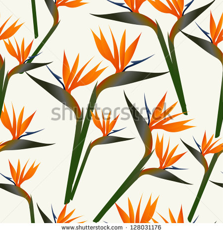 Green-throated Bird Of Paradise clipart #6, Download drawings