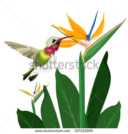 Green-throated Bird Of Paradise clipart #16, Download drawings