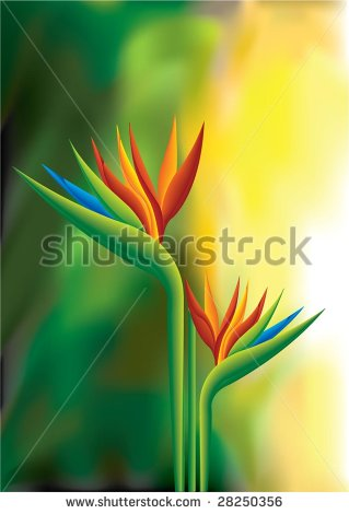 Green-throated Bird Of Paradise clipart #18, Download drawings