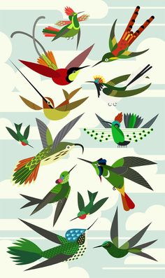 Green-throated Bird Of Paradise clipart #9, Download drawings