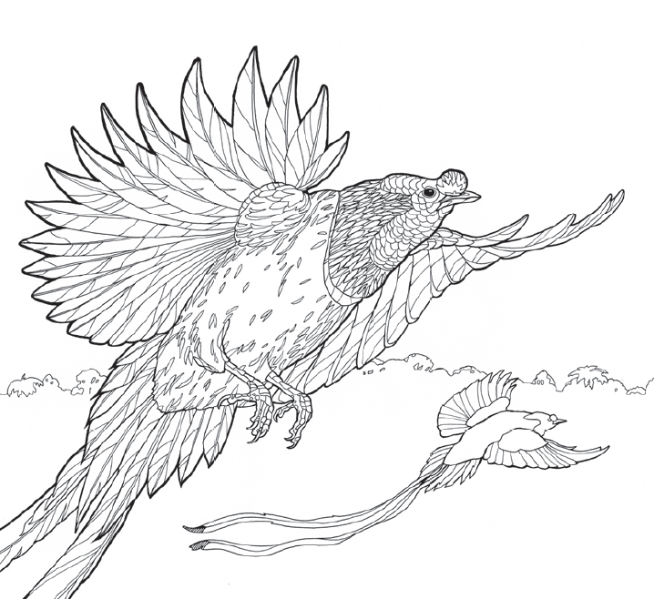 Green-throated Bird Of Paradise coloring #10, Download drawings