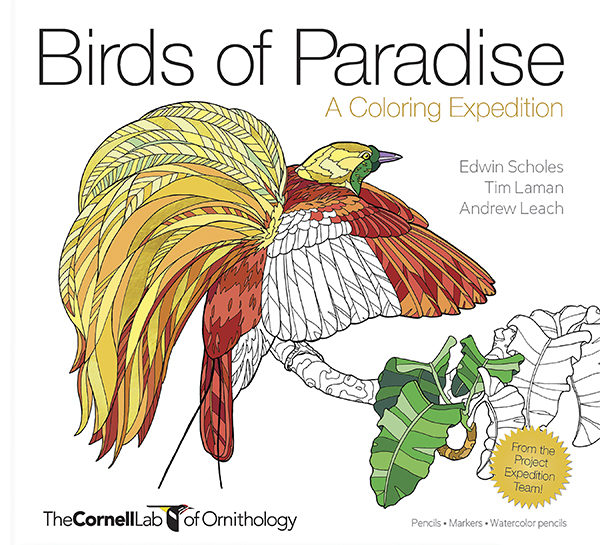 Green-throated Bird Of Paradise coloring #7, Download drawings