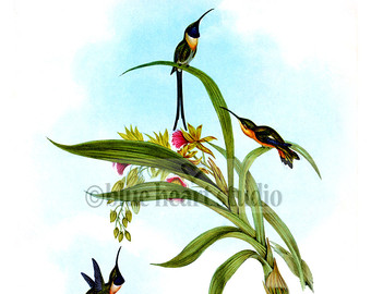 Green-throated Bird Of Paradise svg #20, Download drawings