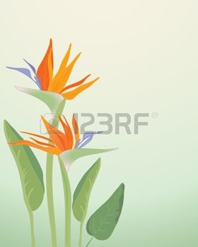 Green-throated Bird Of Paradise svg #5, Download drawings