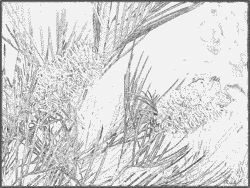 Pamukkale coloring #4, Download drawings
