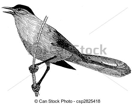 Grey Catbird clipart #11, Download drawings