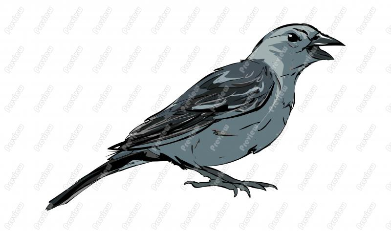Grey Catbird clipart #19, Download drawings