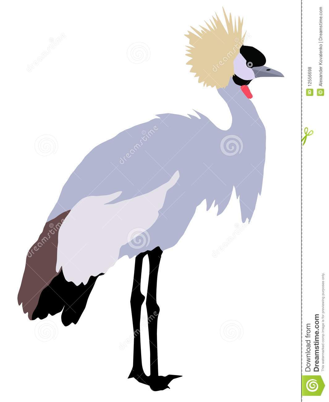 Grey Crowned Crane clipart #17, Download drawings