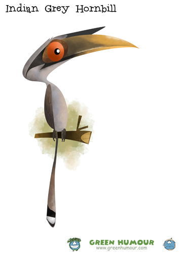 Grey Hornbill clipart #12, Download drawings