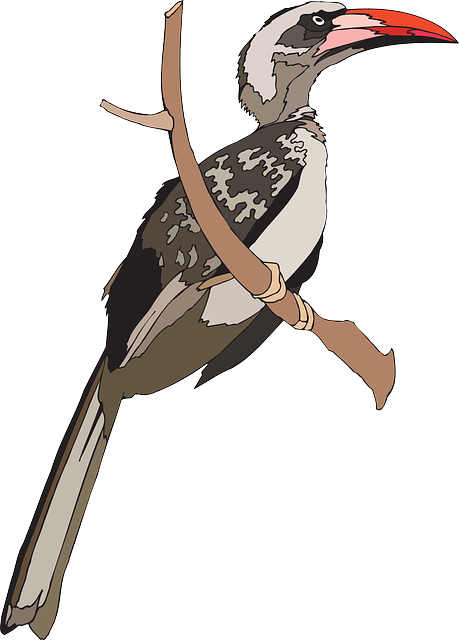 Grey Hornbill clipart #1, Download drawings