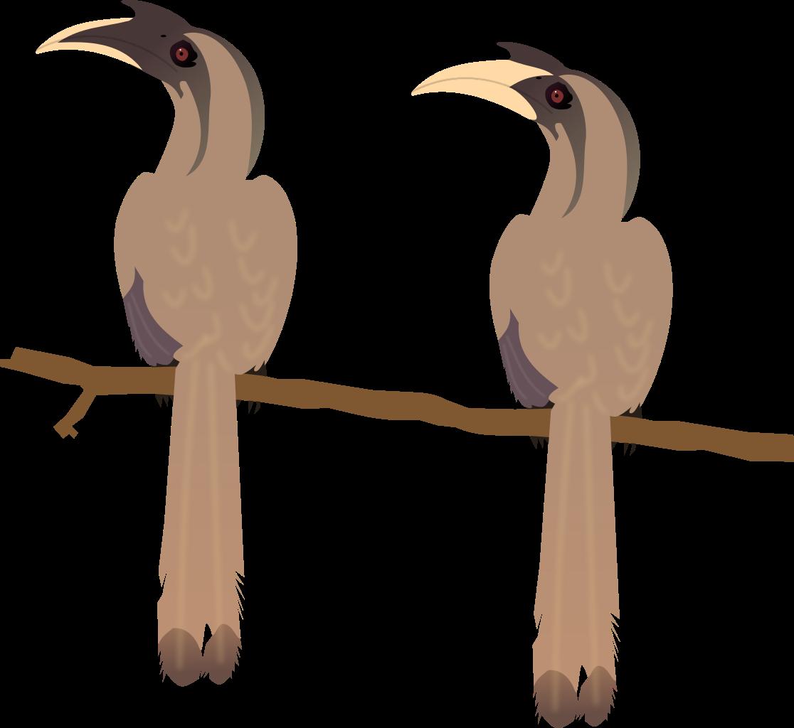 Grey Hornbill svg #20, Download drawings