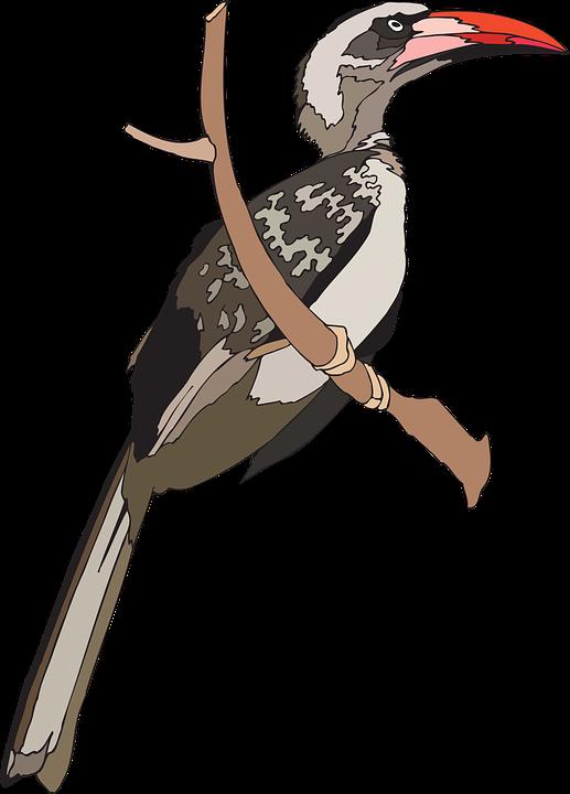 Grey Hornbill svg #9, Download drawings