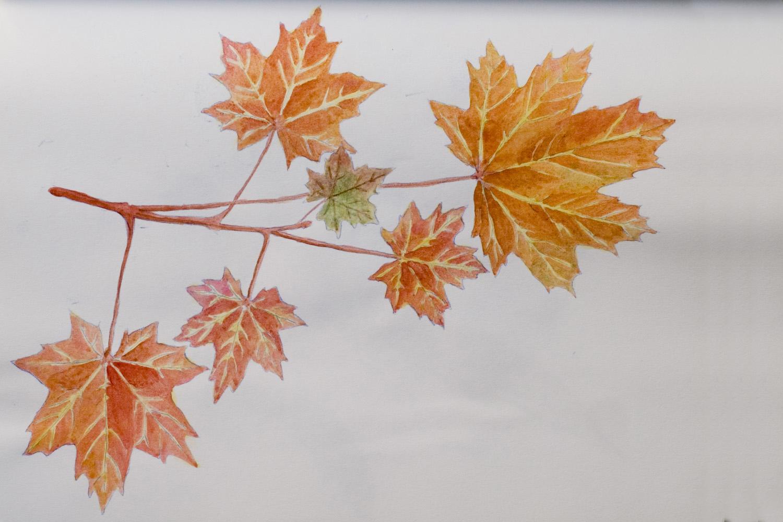 Grey. Leaf coloring #7, Download drawings
