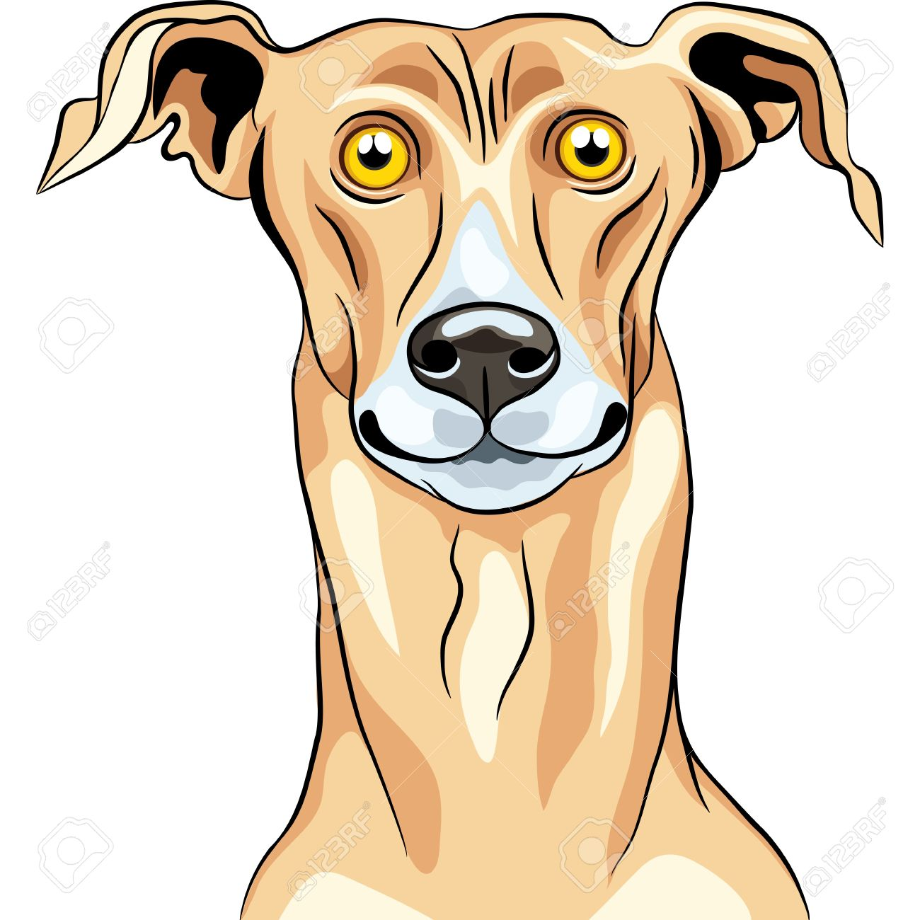 Greyhound clipart #8, Download drawings