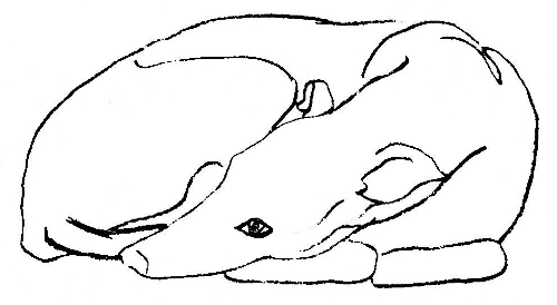 Greyhound clipart #5, Download drawings