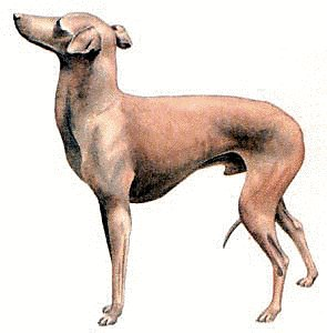 Greyhound clipart #6, Download drawings