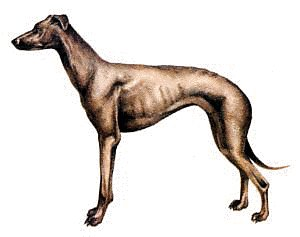 Greyhound clipart #17, Download drawings