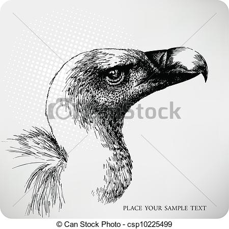 Griffon Vulture clipart #14, Download drawings