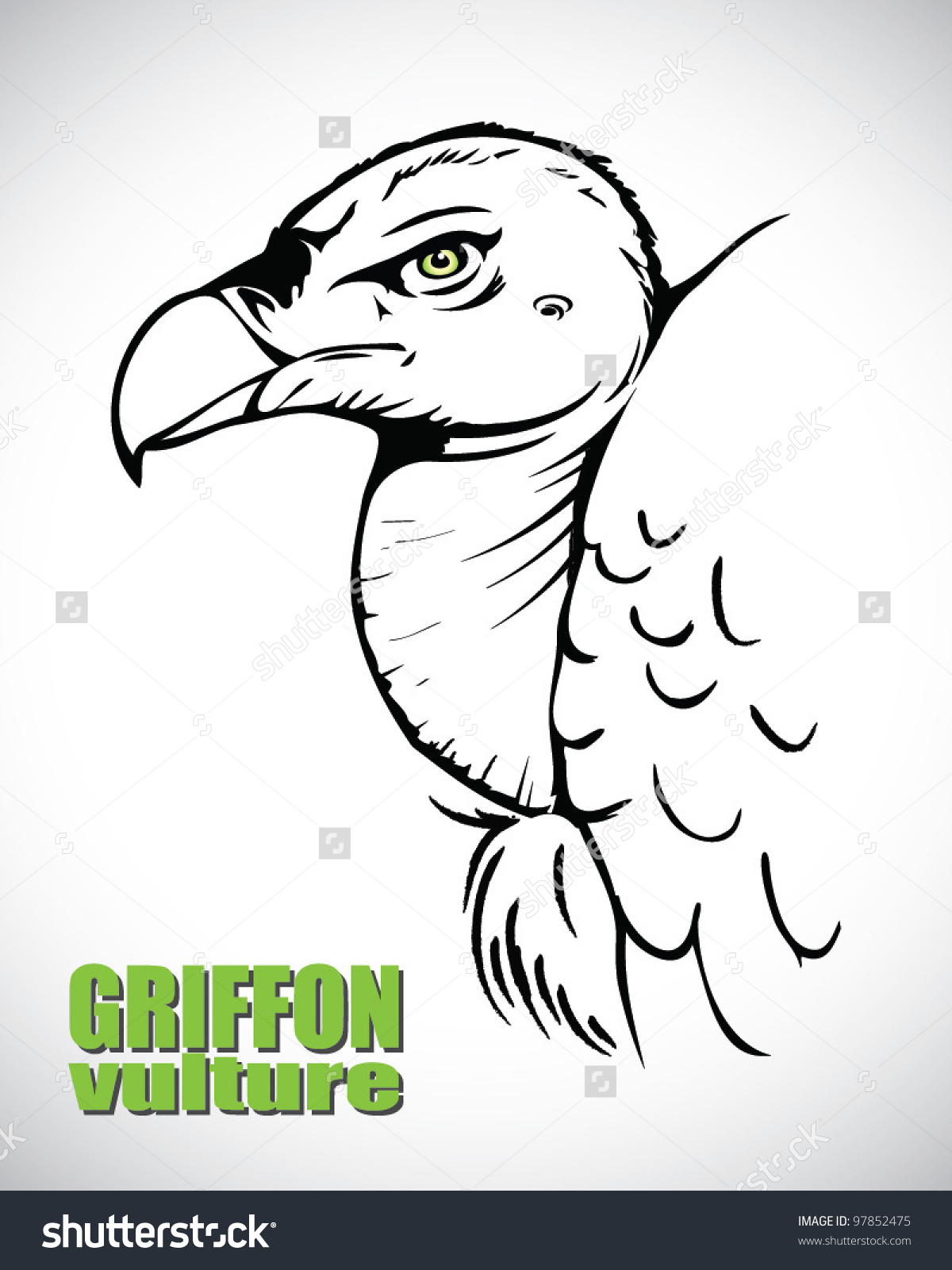 Griffon Vulture clipart #1, Download drawings