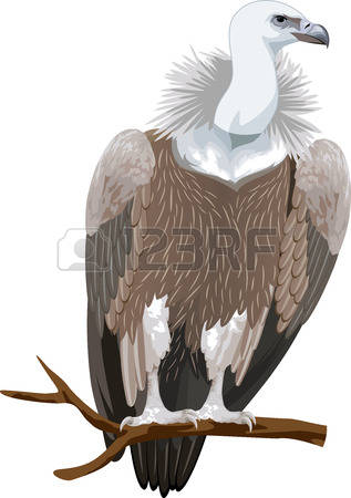 Griffon Vulture clipart #16, Download drawings