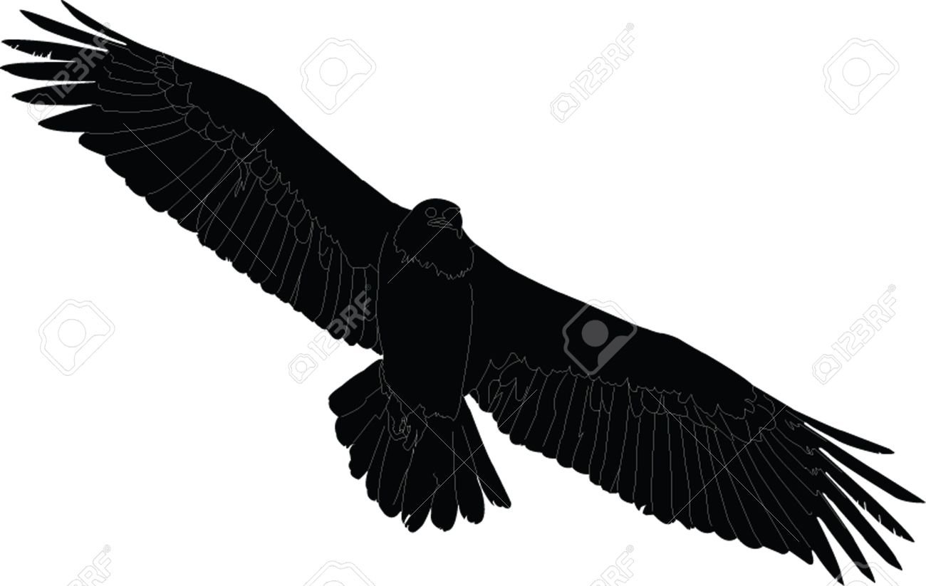 Griffon Vulture clipart #15, Download drawings