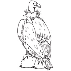 Turkey Vulture coloring #2, Download drawings