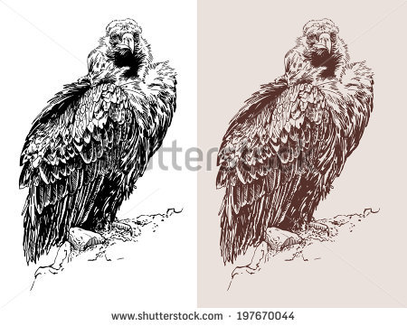 Griffon Vulture svg #2, Download drawings