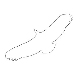 Griffon Vulture svg #16, Download drawings
