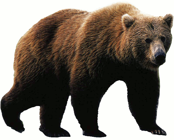 Grizzly Bear clipart #14, Download drawings