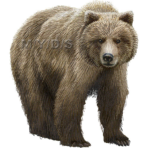 Grizzly Bear clipart #2, Download drawings