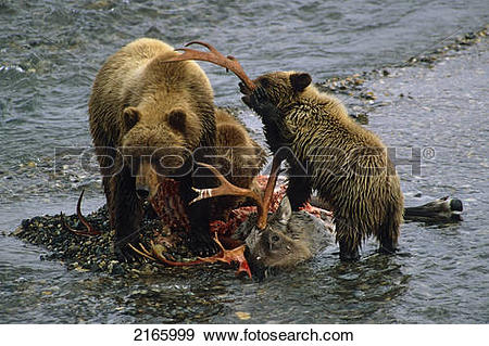 Grizzly Family clipart #11, Download drawings