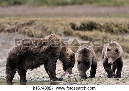 Grizzly Family clipart #6, Download drawings