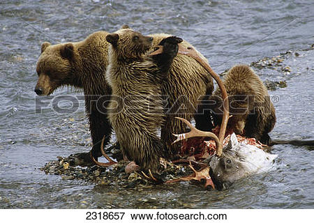 Grizzly Family clipart #14, Download drawings