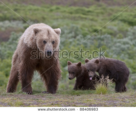 Grizzly Family In Spring clipart #4, Download drawings