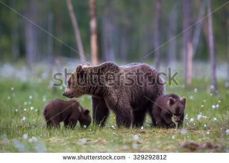 Grizzly Family In Spring clipart #16, Download drawings