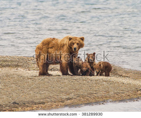 Grizzly Family In Spring clipart #10, Download drawings