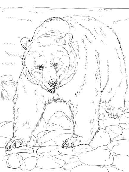 Kermode Bear coloring #1, Download drawings