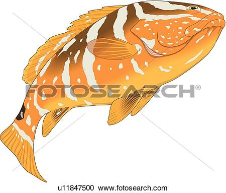 Grouper clipart #7, Download drawings