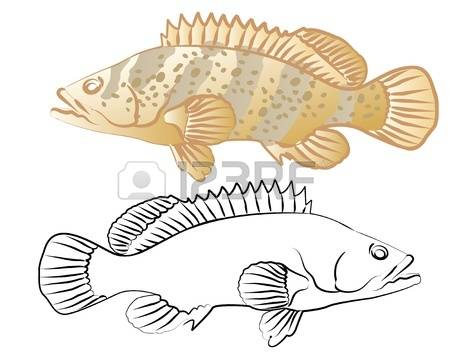 Grouper clipart #2, Download drawings