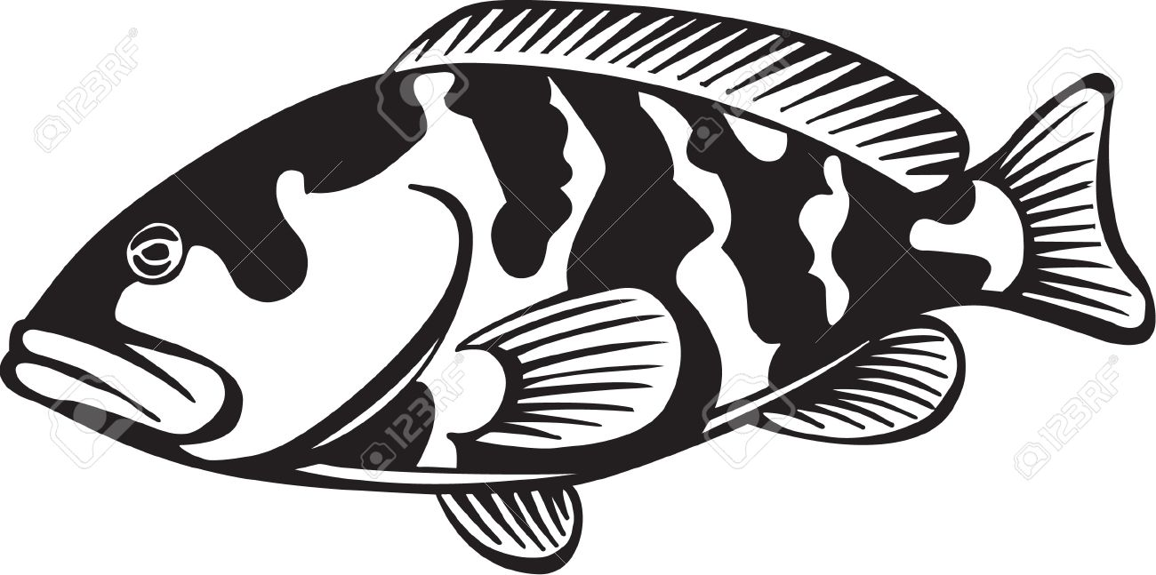 Grouper clipart #15, Download drawings
